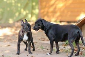 barátkozás-kutyák