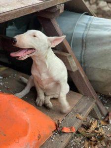 boldog-kutya-panzio