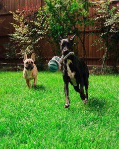 közösjáték-kutyák-kutyapanzió